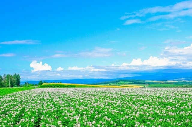 北海道のホームページ制作